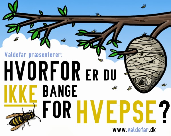 Hvorfor er du ikke bange for hvepse?