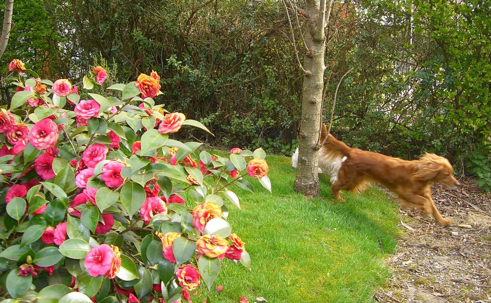 Un petit bout de printemps dans un petit bout de jardin en for Le jardin qui bouge