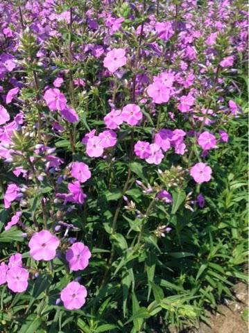 single women in blooming prairie 100% free online dating in blooming prairie 1,500,000 daily active members.