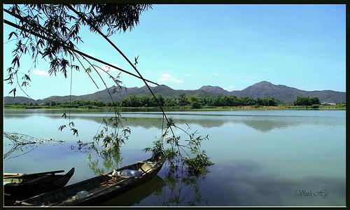 Ảnh cây tre trên con sông quê hương