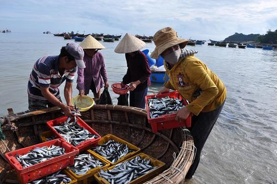 Vì tâm lý sợ ăn cá bị nhiễm độc nên giá cá nục (loại cá ven bờ) chỉ còn khoảng 5.000-7.000 đồng/kg.