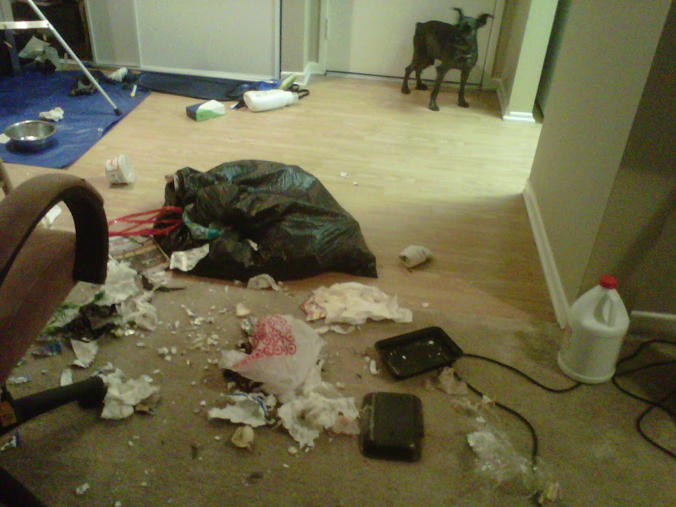 what did you learn?  put up the trash or crate the dog before leaving...