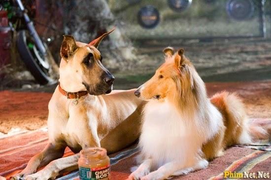 Chú Chó Marmaduke 2010 - Marmaduke 2010 - Image 2