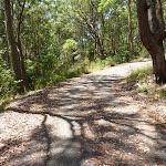 Trail near Mahognay Picnic Area in Blackbutt Reserve (401191)