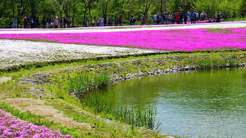 富士芝桜まつり 写真11