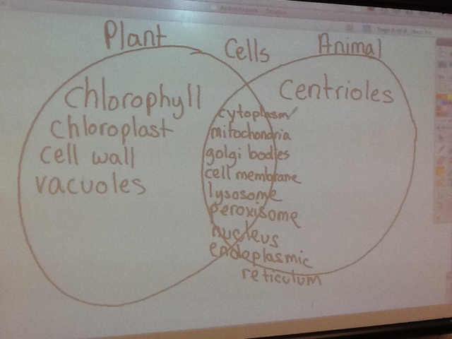 Mrs Combs Class Compare And Contrast Plant And Animal Cells