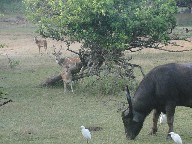 Yala-National-Park-2