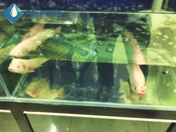 Bán hồ hải sản trọn bộ 6