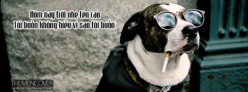 ảnh bìa chú chó hút thuốc lá