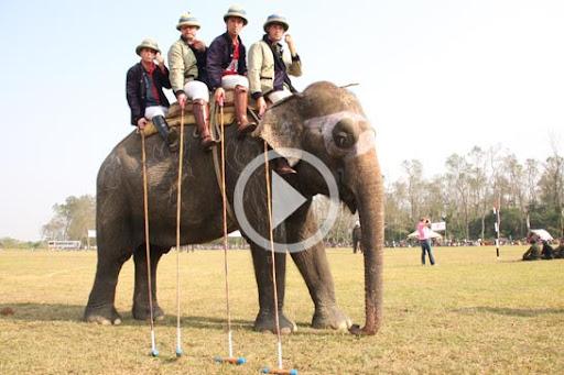 Elephant Polo Vid