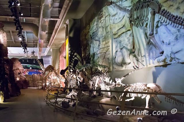 dinozor iskeletlerinin sergilendiği Jurassic Land müzesi