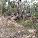 Rock and forest on Stringybark ridge (153436)