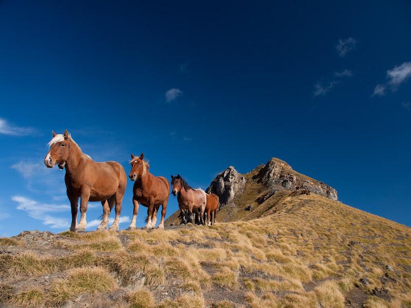 Cavalls sota el petit cim de Saoubiste