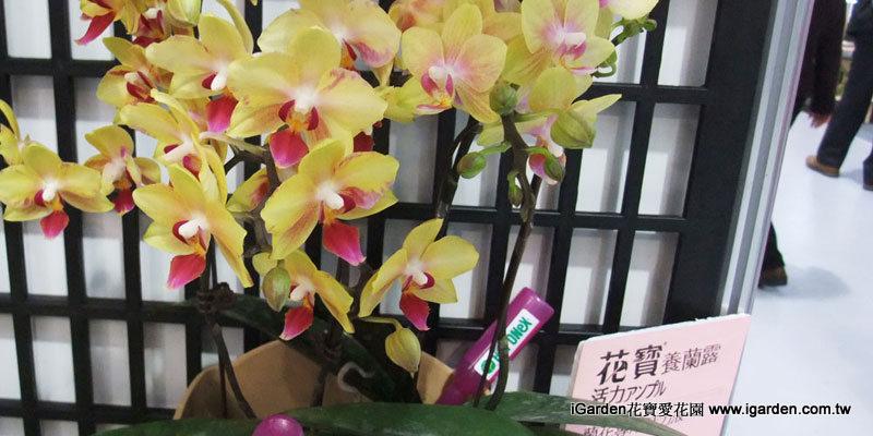 蝴蝶蘭可使用花寶養蘭液 | iGarden花寶愛花園