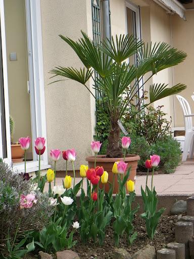 Quelques fleurs IMGP5856