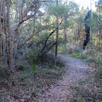 Banksia Forest along Lovetts Pool track (307928)