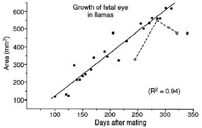 Évolution du diamètre de la cavité orbitaire au cours des 9 derniers mois de la gestation de 60 lamas