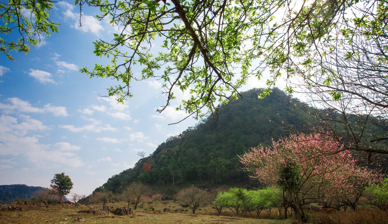 Mộc Châu – nơi những nàng tiên xuân ngự trị - ảnh 2