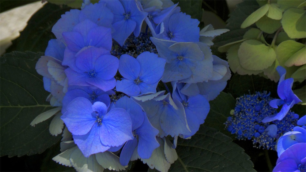 So Blue.jpg