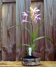 Voici mes plantes d'accompagnements 053hr8F1_lVSQhYrxZvfMNofPxsSUUUAIrG0u7x82w=w186-h221-p-no