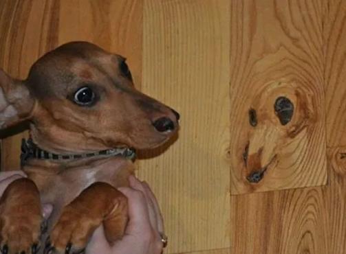 imagem de um cachorro ao lado de um pedaço de madeira que lembra o rosto do cachorro