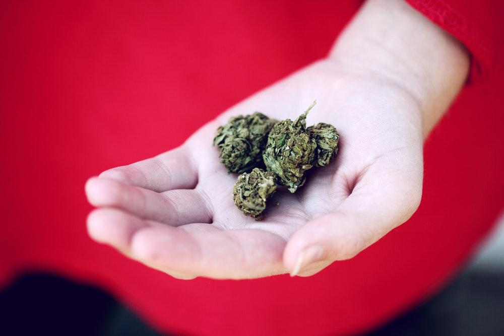kush on person's palm
