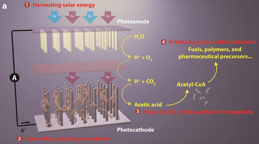 Image result for CO2 to fuel artificial photosynthesis