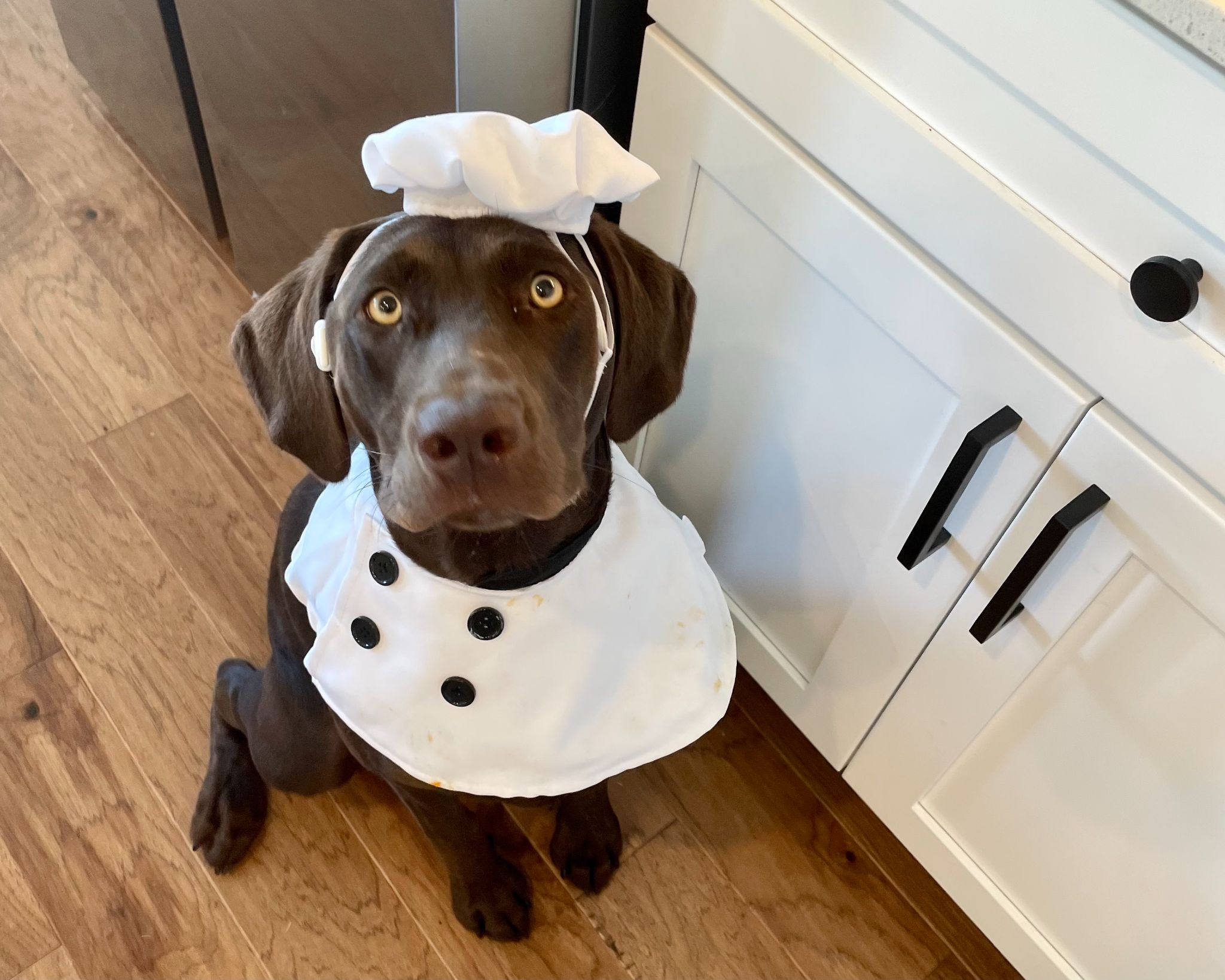 dog in chef hat