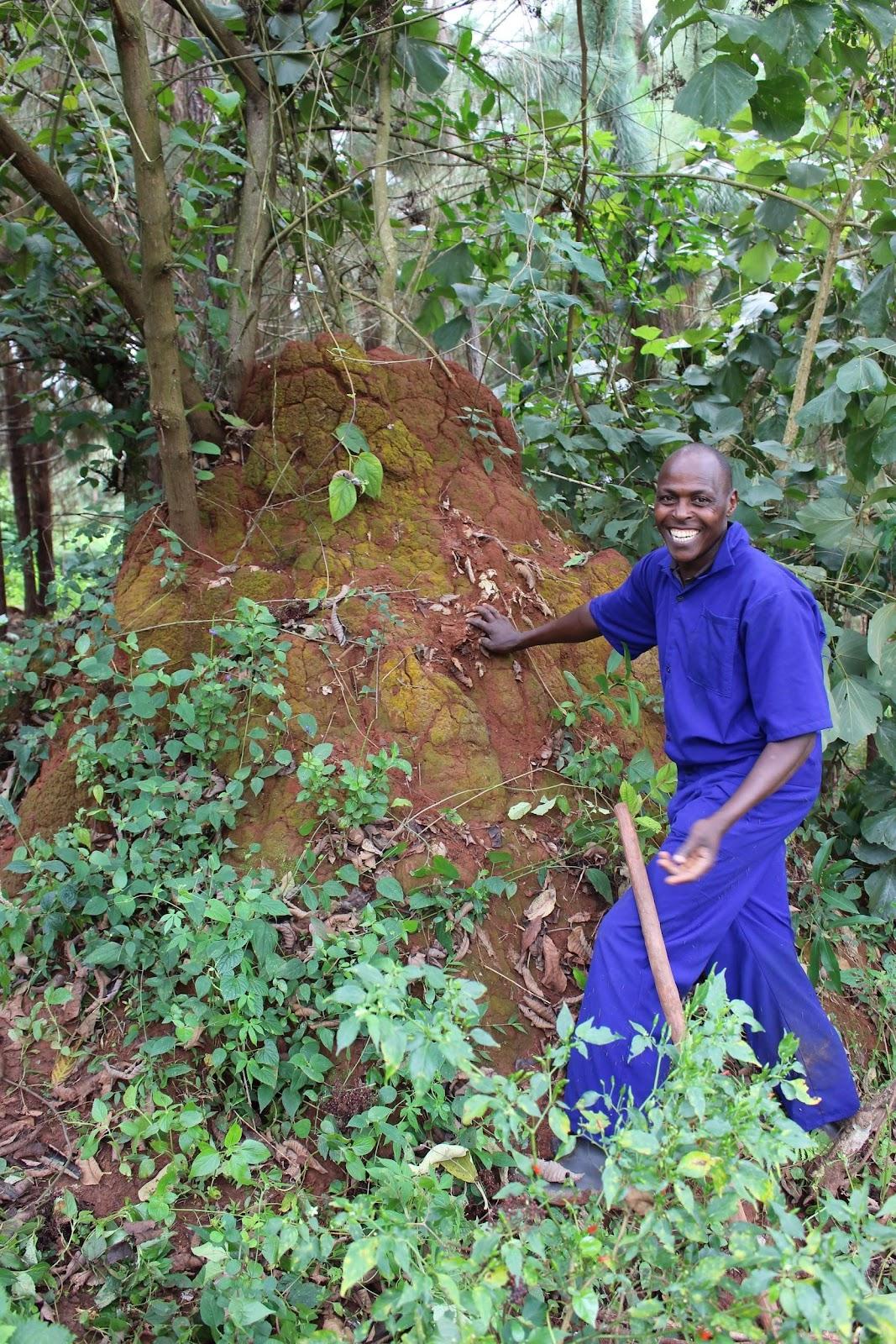 Tom Lubeba and one of his prized termite mounds at his farm in Banda Kyandazza, Uganda. Credit: Josh Evans.
