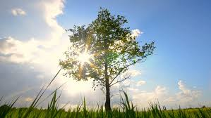 Image result for tree growing