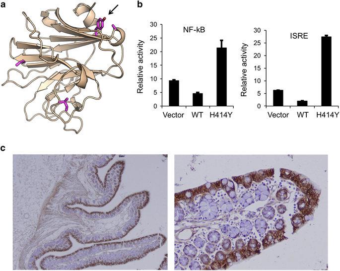 IBD_protein_structure.jpg