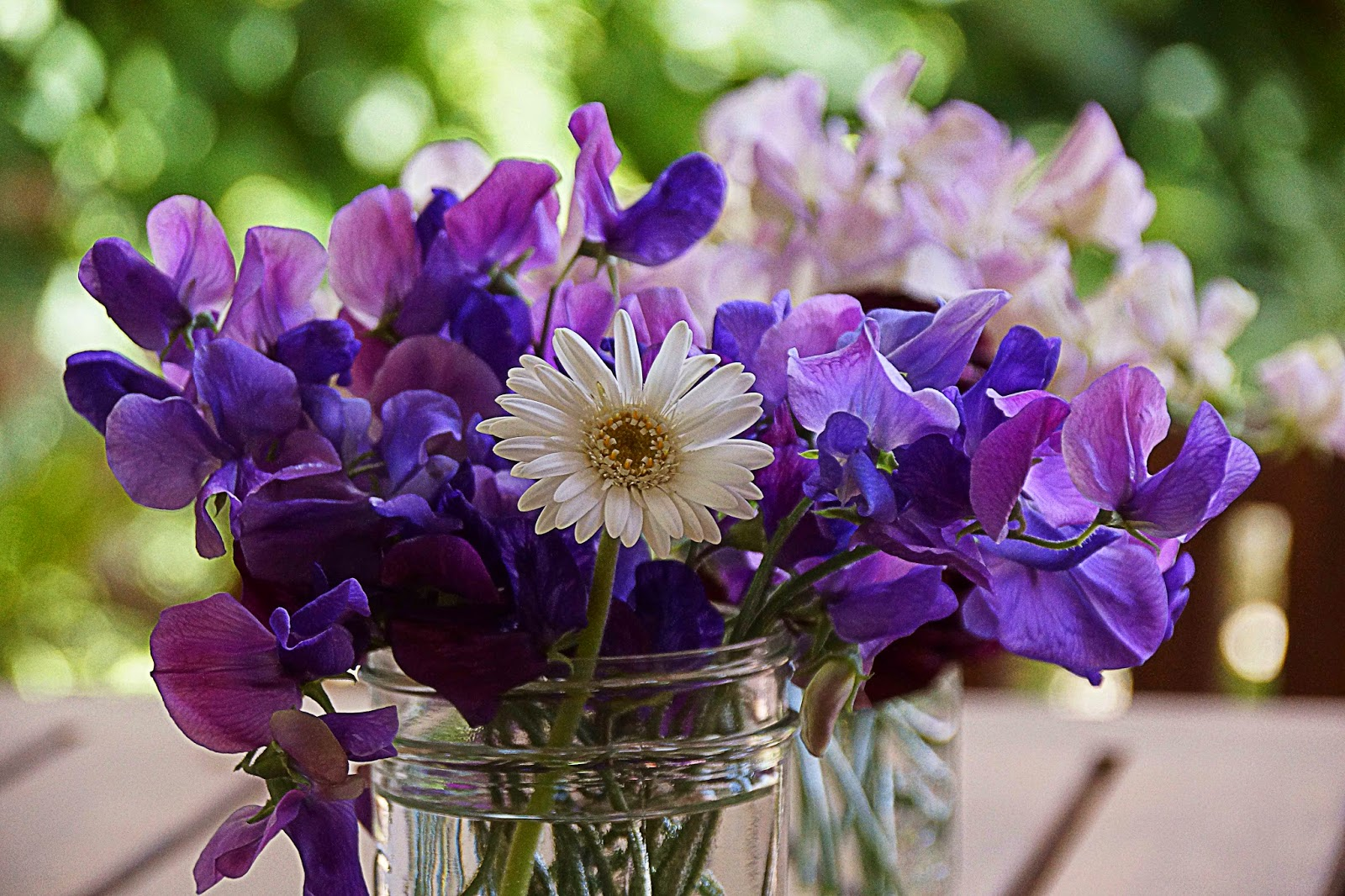 April Birth Flower Daisy And Sweet Pea Avas Flowers