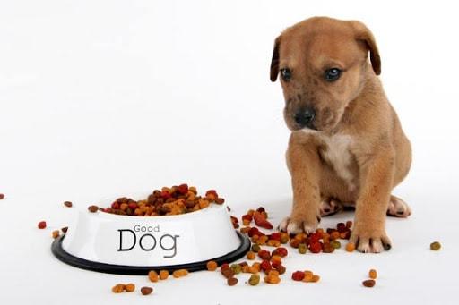 Pate cho chó - Hướng dẫn cách làm pate cho chó tại nhà cực dễ, cực ngon 2020