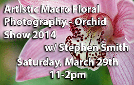 Artistic_Macro_Floral_Photography-Orchid-Show.png