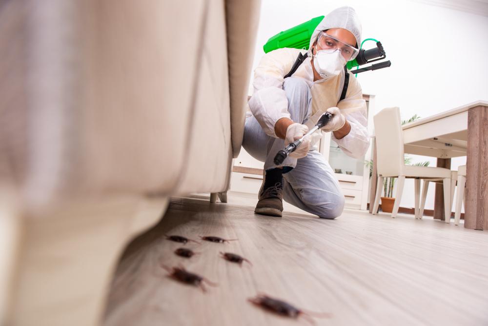 Um dedetizador exterminando insetos embaixo de um sofá.