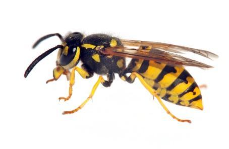 Afbeelding met insect  Automatisch gegenereerde beschrijving