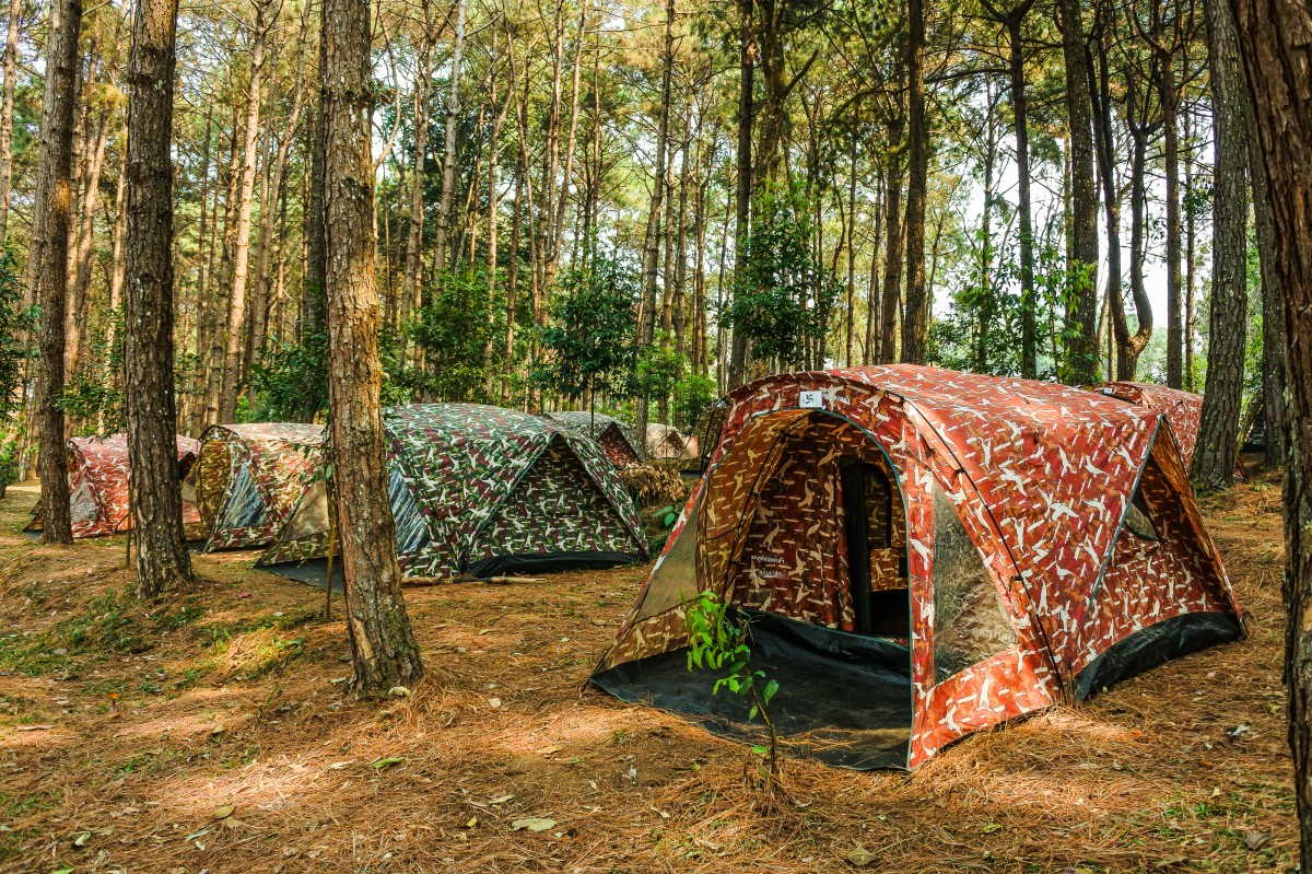 tent, camping, forest, tree, woodland, north, tourism, famous place, holiday, summer, mountain, thailand, national, wood, park, journey, nature, tranquil scene, asia, relaxation, hiking, adventure, outdoor, environment, outdoors, vacations, campsite, evening, travel, landscape, natural environment, leaf, woody plant, grove, grass, plant, jungle, state park, recreation, old growth forest