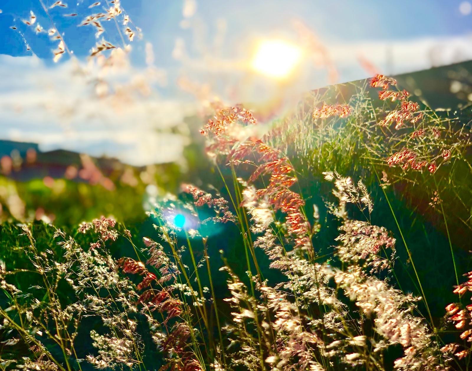 meadows in spring