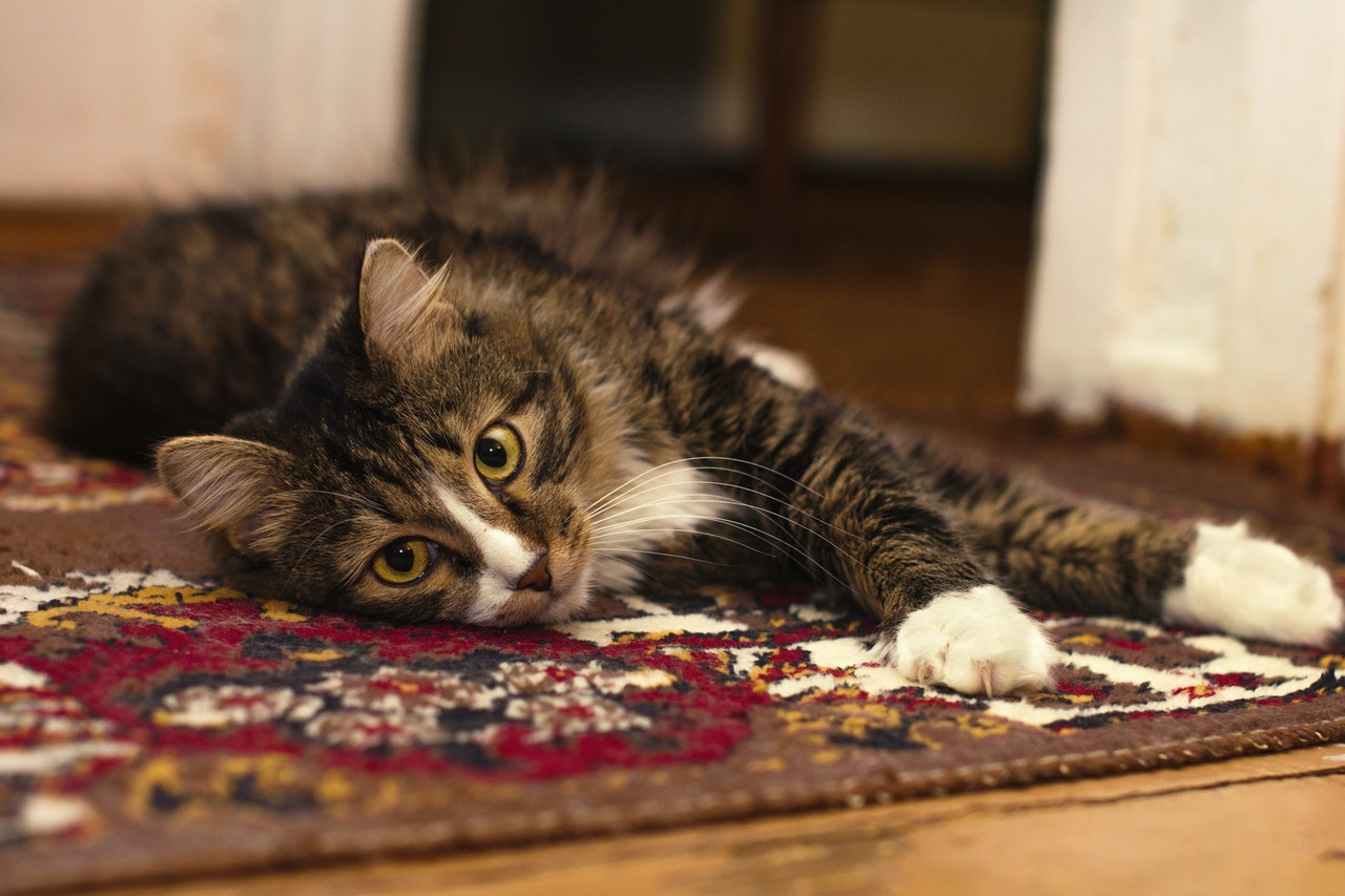 How to naturally get rid of cat pee smell on carpet.