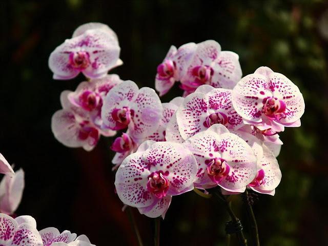 Cửa hàng hoa lan hồ điệp độc lạ và ấn tượng, chỉ từ 150k