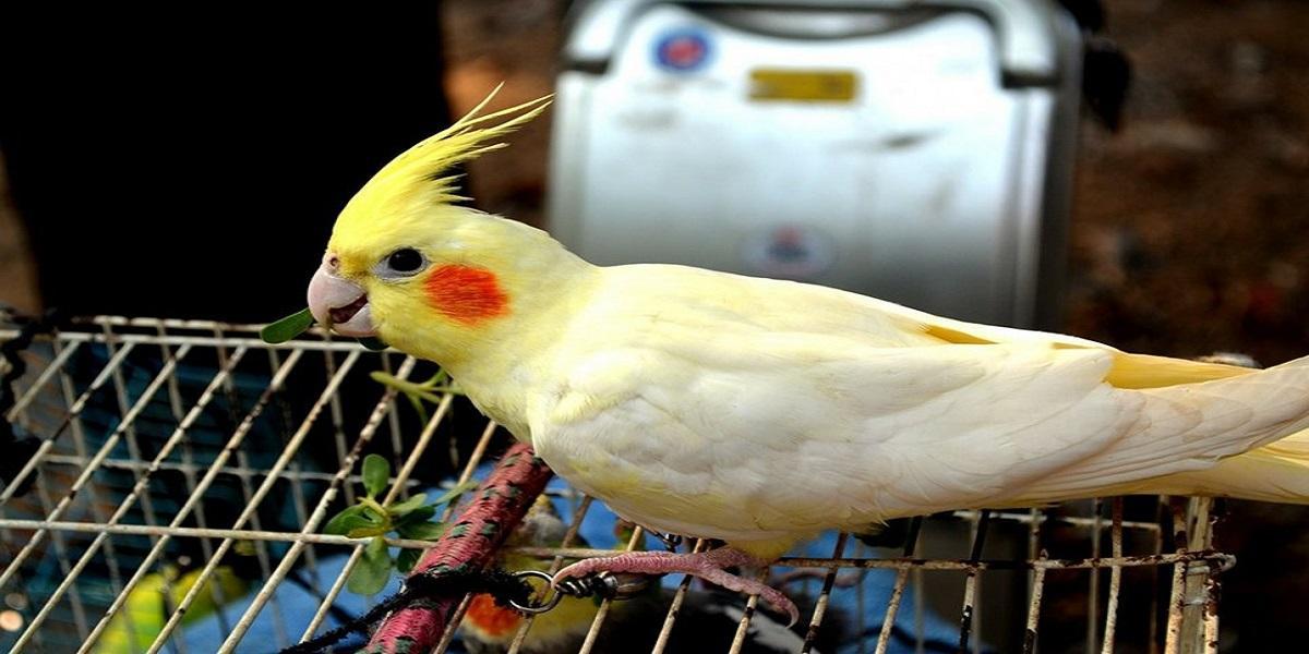 Pássaro com as asas abertas  Descrição gerada automaticamente com confiança média