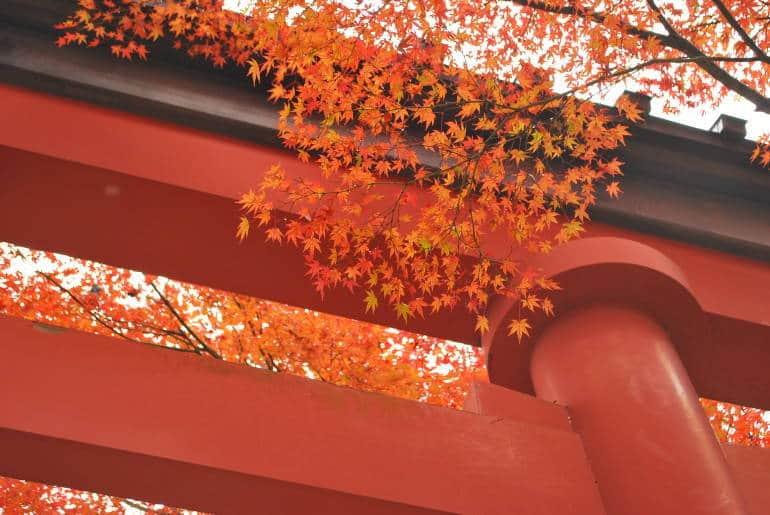 autumn leaves tokyo