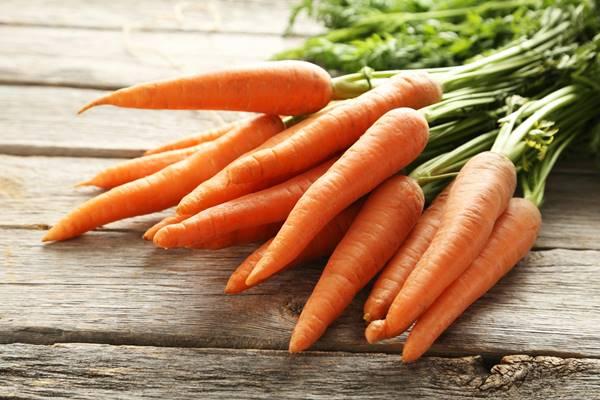 Cenoura cultivada em orta em casa