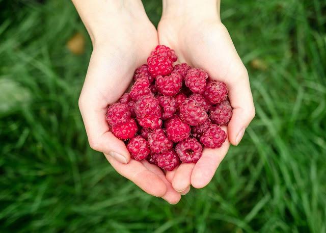 raspberry benefit