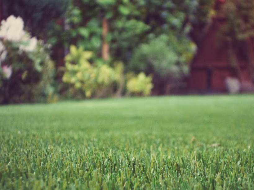 Image result for artificial lawn