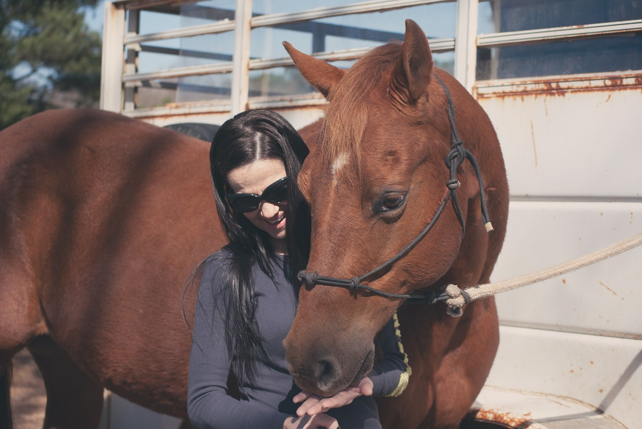 Everything About CBD for Horses