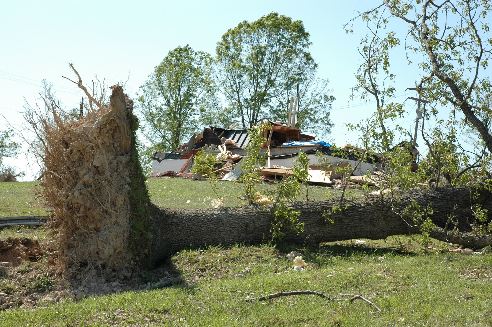 FEMA_-_35153_-_A_blown_over_tree_in_Missouri.jpg