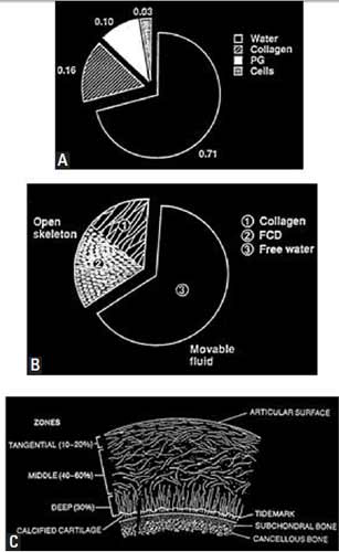 A. Pie diagram showing the biochemical composition of the articular cartilage