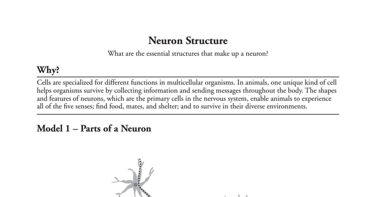 POGIL 29 Neuron Structure-S.pdf - Google Drive