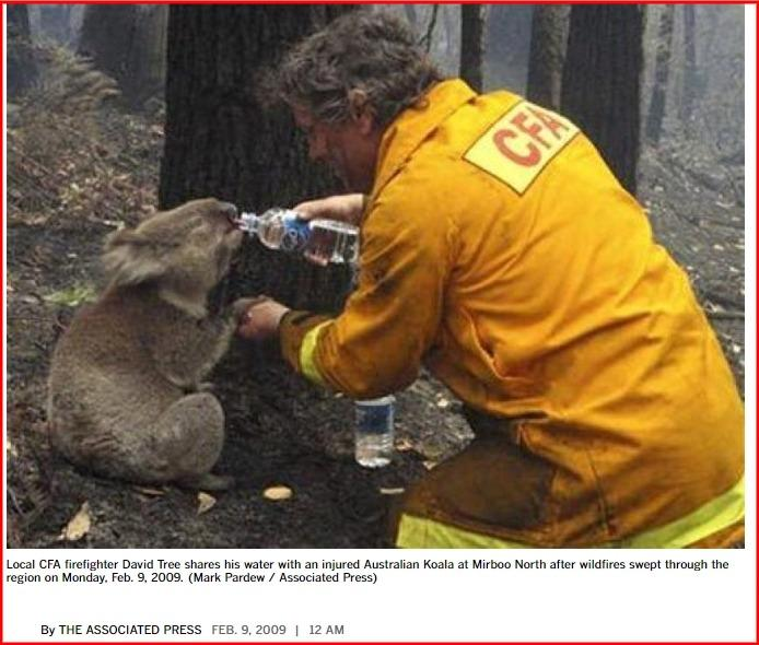C:\Users\Fact5\Desktop\Australian Bushfire images\screenshot-www.latimes.com-2020.01.06-18_54_41.jpg